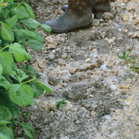 米ぬかを散布し耕したオリジナルの土壌 みるみる植物が元気になるという