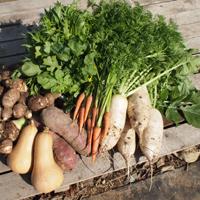 取材時に収穫された野菜