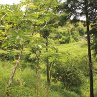 福津農園-果樹畑