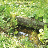 福津農園-豊かな水源