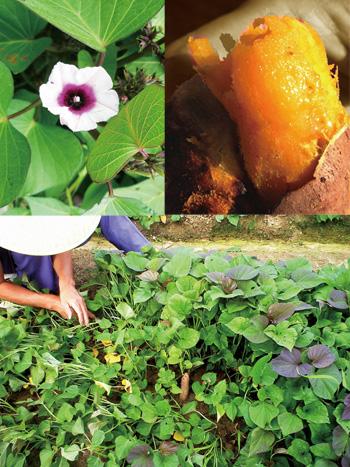 喜美農園‐イメージ